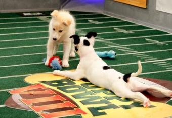 The Puppy Bowl - image from Animal Discovery