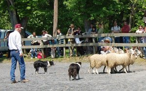 A shepherd (not Catherine) at the 2011 Maryland Sheep and Wool Festival