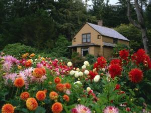 plant gardens